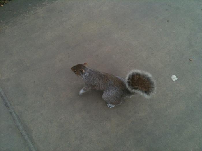 Squirrel, Bunhill Fields